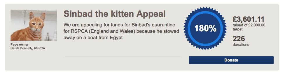 sinbad, egyptian cat, Britten, UK, CAT UK