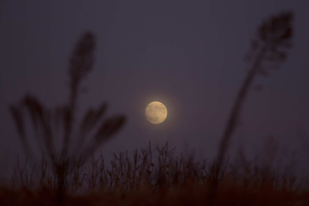 "The moon rises over Hefer Valley in Israel, Sunday, Nov. 13, 2016. The upcoming supermoon, on Nov. 14, will be especially ""super"" because it's the closest full moon to Earth since 1948. (AP Photo/Ariel Schalit)"